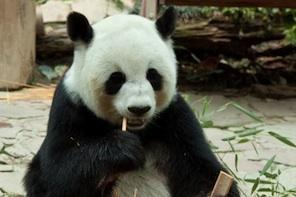 Implications of Google Panda
