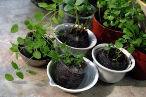 3 lead nurturing tips